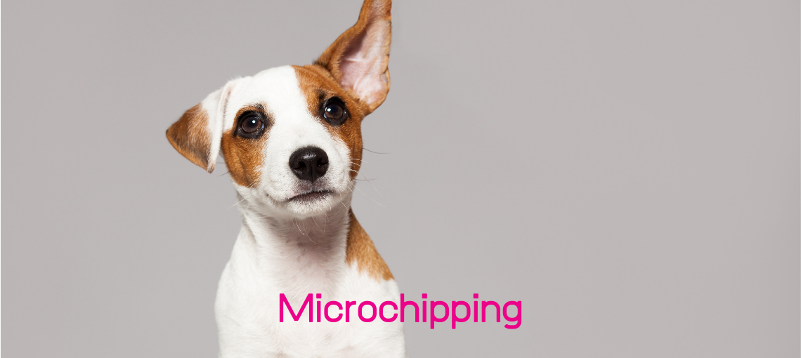 MICROCHIPPING2